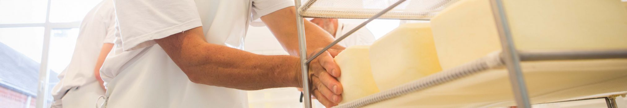 A fresh Trappist cheese is readied for steeping in brine.