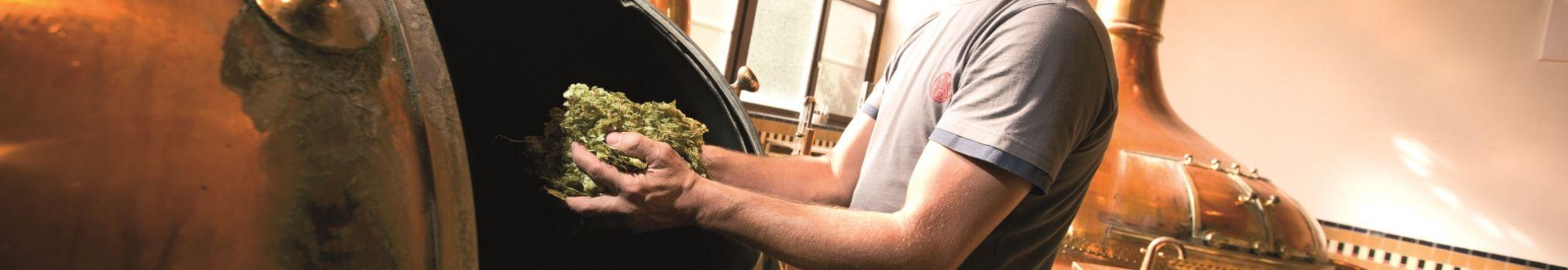Het brouwproces van trappistenbier Westmalle