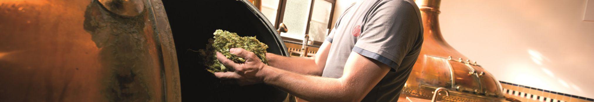 Le maître brasseur de Westmalle ajoute des cônes de houblon dans la cuve de cuisson