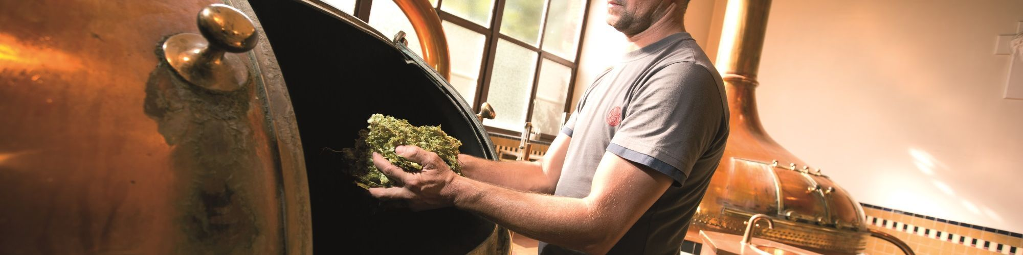 A brewer adds hop cones to the boiling kettle